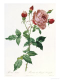 Bouquet of Rose, Anemone and Clematis Giclee Print by Pierre-Joseph Redouté