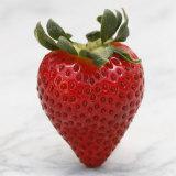 Sweet Strawberry Fotografía por Nicole Katano