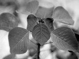 Royal Burgundy Leaves I Photo by Nicole Katano