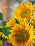 Smile: Sunny Sunflower Foto von Nicole Katano