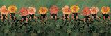 Roses sauvages Affiches par Anne Geddes