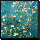 花咲くアーモンドの枝(1890年) 額入りキャンバスプリント : フィンセント・ファン・ゴッホ
