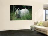 Endangered White Rhinoceroses Vægplakat af Joel Sartore