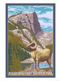 Big Horn Sheep, Rocky Mountain National Park Arte por  Lantern Press