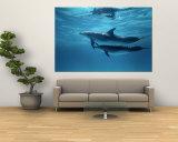 A Pair of Spotted Dolphins Veggmaleri av Wolcott Henry