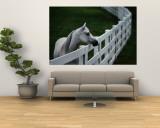 White Horse Staring over a Wooden Fence Seinämaalaus tekijänä Raymond Gehman