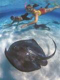 Stingray City, Grand Cayman, Cayman Islands, Caribbean Fotografie-Druck von Greg Johnston