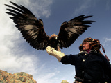 Takhuu Raising His Eagle, Golden Eagle Festival, Mongolia Photographic Print by Amos Nachoum