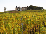 Vineyard and Medieval Chateau, Choteau d'Yquem, Sauternes, Bordeaux, Gironde, France Photographic Print by Per Karlsson