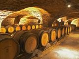 Eichenfässer in einem Keller  in der Domaine Comte Senard, Aloxe-Corton, Bourgogne, Frankreich Fotografie-Druck von Per Karlsson