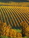 View Over the Vineyards in Bergerac, Chateau Belingard, Bergerac, Dordogne, France Lámina fotográfica por Per Karlsson