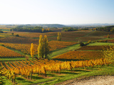View Over the Vineyards in Bergerac, Chateau Belingard, Bergerac, Dordogne, France Photographic Print by Per Karlsson