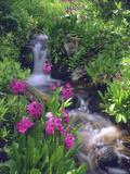 Wildflowers Along Flowing Stream in an Alpine Meadow, Rocky Mountains, Colorado, USA Premium fotografisk trykk av Christopher Talbot Frank