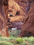 Red Rock, White Horse, White Mountains, Canyon De Chelly, Arizona, USA Fotografie-Druck von Nancy Rotenberg