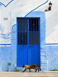 Detail of Siamese Cat in Doorway with Wrought Iron Cover, Puerto Vallarta, Mexico Photographic Print by Nancy & Steve Ross