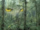 Montage, Owl, Forest, Oregon, USA Fotoprint av Nancy Rotenberg