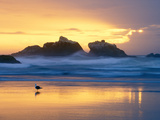 Beach at Sunset with Sea Stacks and Gull, Bandon, Oregon, USA Premium-Fotodruck von Nancy Rotenberg
