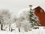 Red Barn in Fresh Snow, Whidbey Island, Washington, USA Fotografie-Druck von Trish Drury