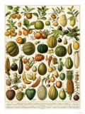 Tropical Fruits Giclee Print