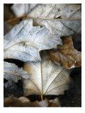Fallen Leaves II Photo by Nicole Katano