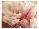 Sweet Flower I Photo by Nicole Katano