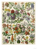 Flowering Shrubs, Including Peony, Rose, Lilac, Echinopsis, Fuschia, Laurel, Magnolia, Rhododendron Reproduction procédé giclée
