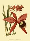 Orchid Splendor III Posters