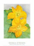 Squash Blossoms Kunstdruck von Georgia O'Keeffe