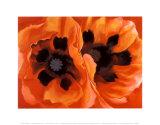 Oriental Poppies Kunstdrucke von Georgia O'Keeffe