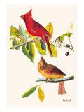 Rouge cardinal Poster par John James Audubon
