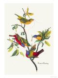 Painted Bunting Pôsters por John James Audubon