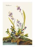 Field Sparrow Art by John James Audubon