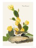 Vesper Sparrow Prints by John James Audubon
