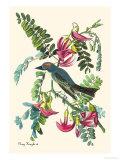 Gray Kingbird Plakater af John James Audubon