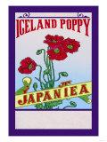 Iceland Poppy Tea Poster