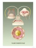 Jellyfish: Narcomedusae Poster von Ernst Haeckel