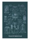 Jellyfish: Trachymedusae Kunstdruck von Ernst Haeckel