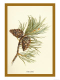 Fir Cone Prints by W.h.j. Boot