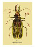 Beetle: Brazilian Prionus Cervicornis Posters av Sir William Jardine