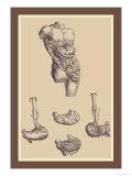 Bauch Kunstdrucke von Andreas Vesalius