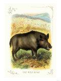 The Wild Boar Giclée-Premiumdruck