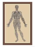Nervensystem Kunstdruck von Andreas Vesalius