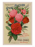 Our New Guide to Rose Culture, 1895 Poster