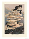 Agaricus Ostreatus Lámina giclée prémium por William Hamilton Gibson