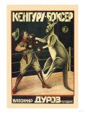 Kangaroo Boxer Posters