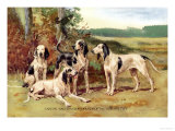 Gascon-Saintongeois Hounds of the Virelade Type Art by Baron Karl Reille