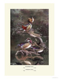 Mandarin and Carolina Ducks Affiches par Allan Brooks