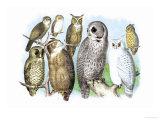 Hoot of Owls Posters av Theodore Jasper