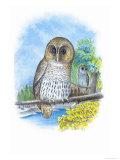 The Barred Owl Posters av Theodore Jasper