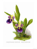 Zygopetalum Discolor Atrocoeruleum Posters by H.g. Moon